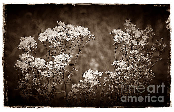 Going To Seed Print by Judi Bagwell