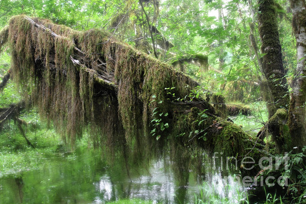 Hall Of Mosses - Hoh Rain Forest Olympic National Park Wa Usa Print by Christine Till