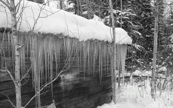 Sue Wild Rose - Ice Cabin