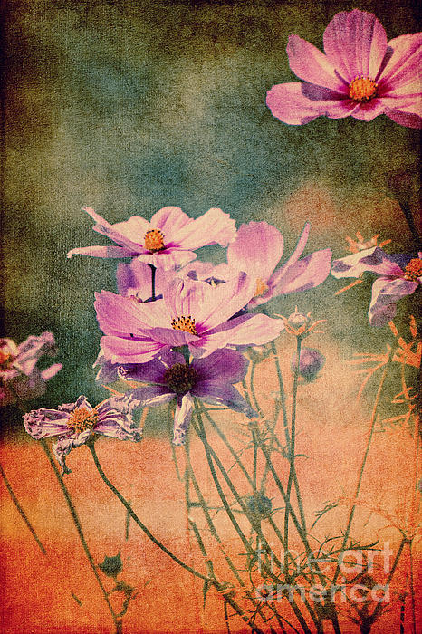 It's Summer Print by Angela Doelling AD DESIGN Photo and PhotoArt
