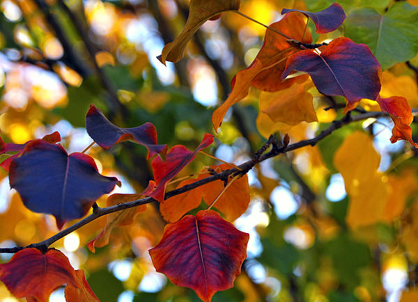 Leaves Of Autumn Print by Stephen Anderson