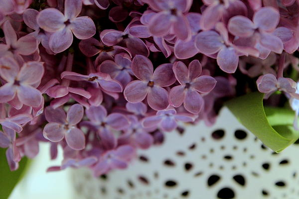 Lilac Print by Marica Jukic