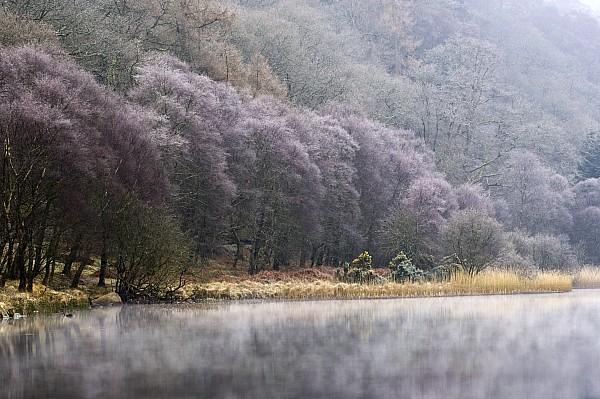 Lower Lake, Glendalough, County Print by Peter McCabe