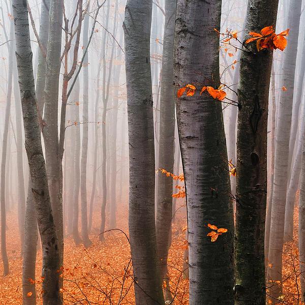 Orange Wood Print by Evgeni Dinev