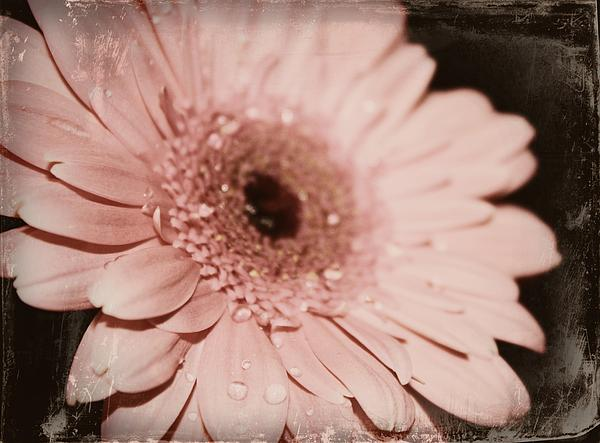 Pale Pink Print by Cathie Tyler