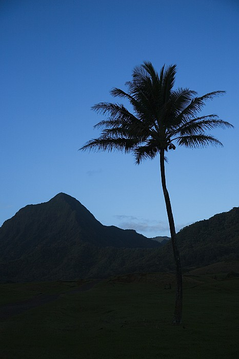 Palm And Blue Sky Print by Dana Edmunds - Printscapes