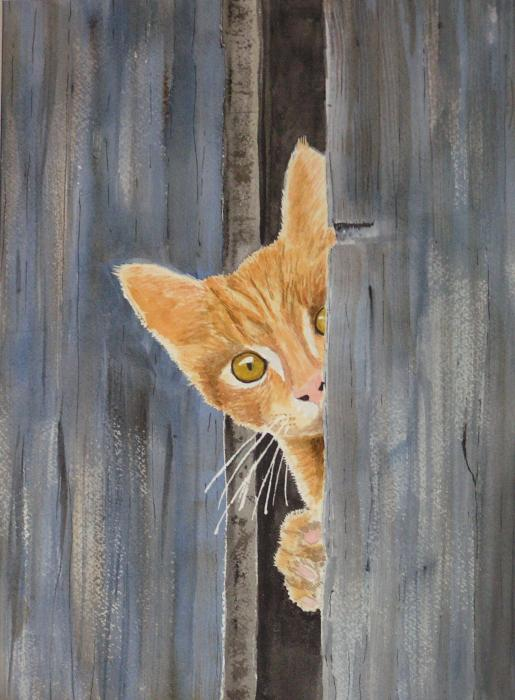 Peeking Kitty Print by Ally Benbrook