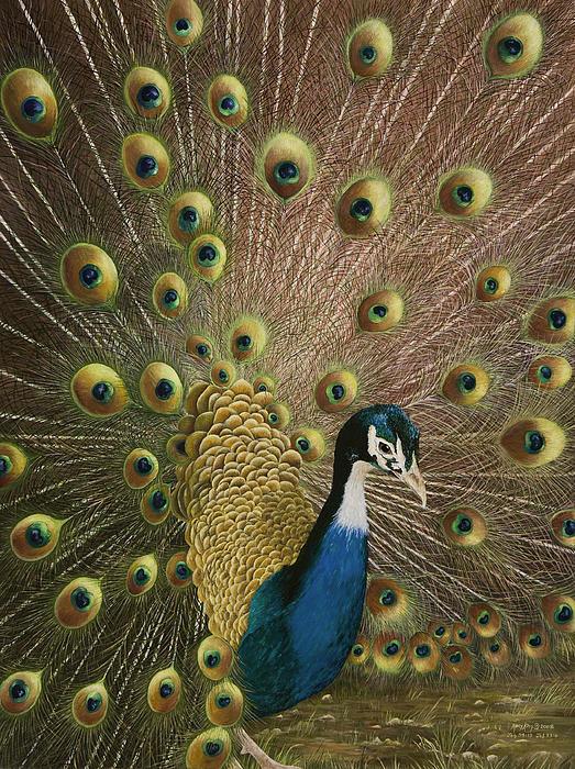 Petit Jean Peacock Print by Mary Ann King