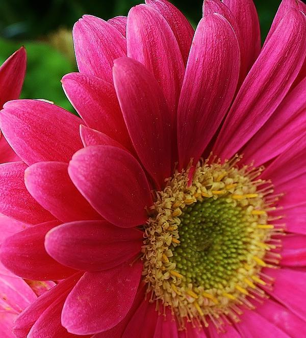 Bruce Bley - Pink Delight