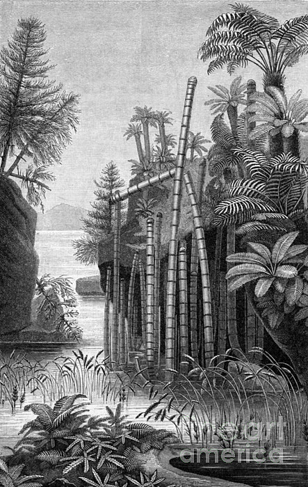 Plants Of The Triassic Period Print by Science Source