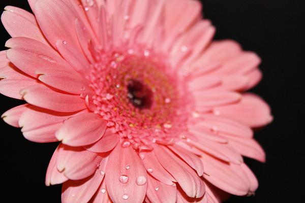 Rain Drops Print by Cathie Tyler