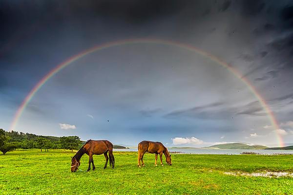 Evgeni Dinev - Rainbow Horses