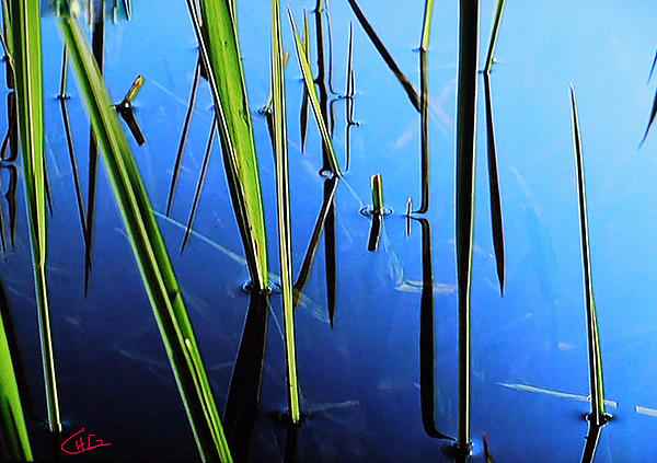 Reflections In Water Print by Colette V Hera  Guggenheim