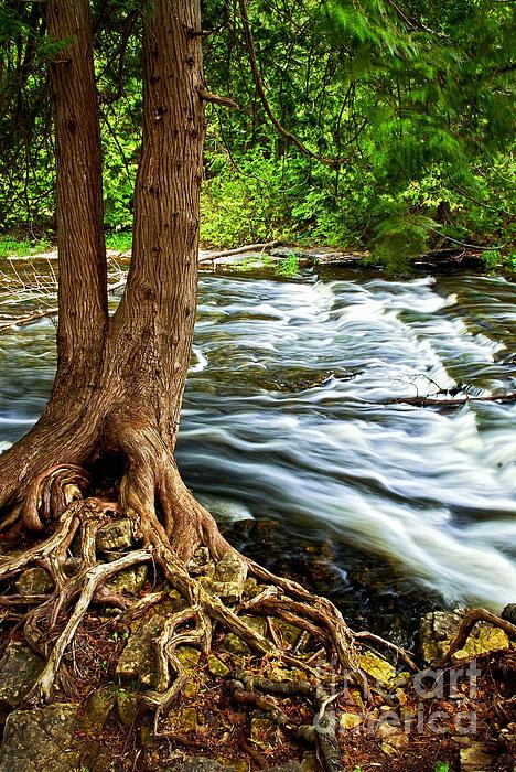 River Through Woods Print by Elena Elisseeva