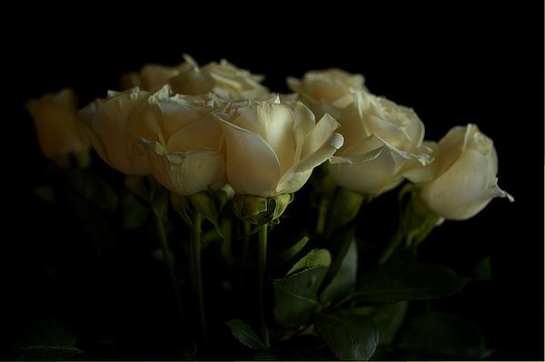 Roses Print by Mario Celzner
