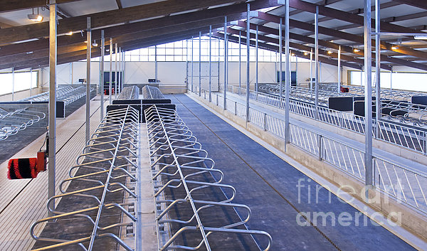 Row Of Cattle Cubicles Print by Jaak Nilson