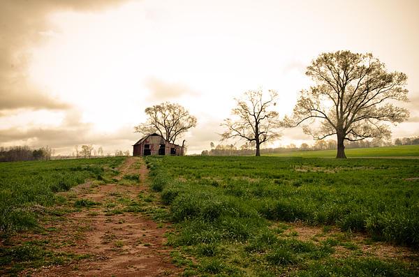 Victoria Lawrence - Rye in Spring