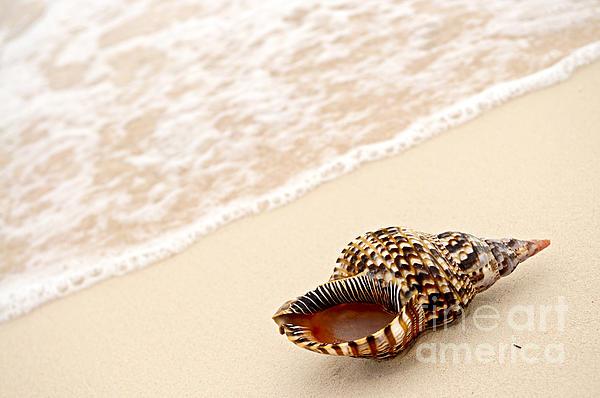 Seashell And Ocean Wave Print by Elena Elisseeva
