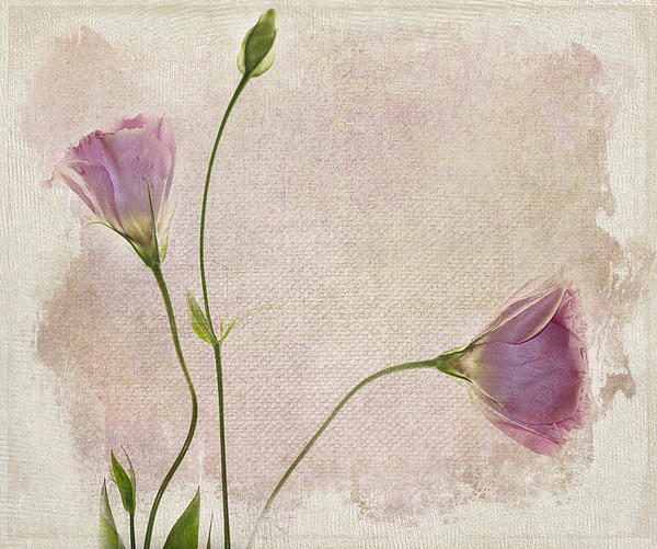Softly Print by Rebecca Cozart