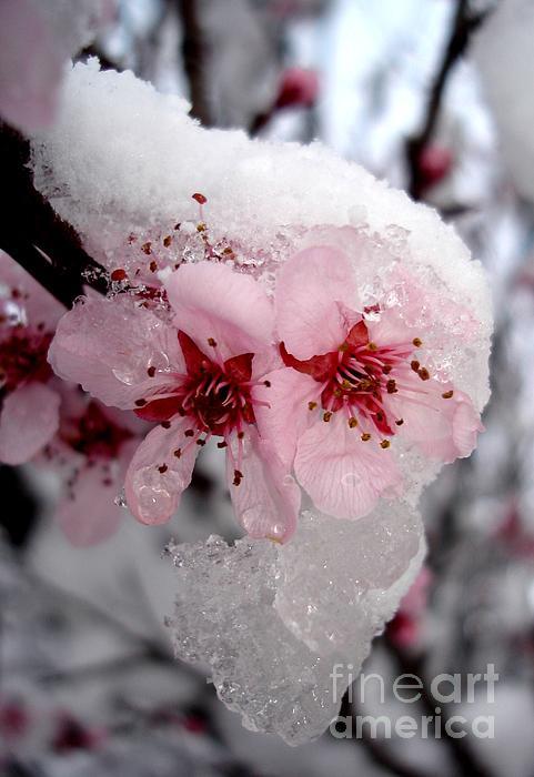 Kerri Mortenson - Spring Blossom Icicle