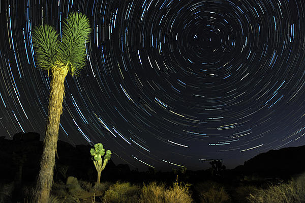 Star Trails In Joshua Tree Print by Dung Ma