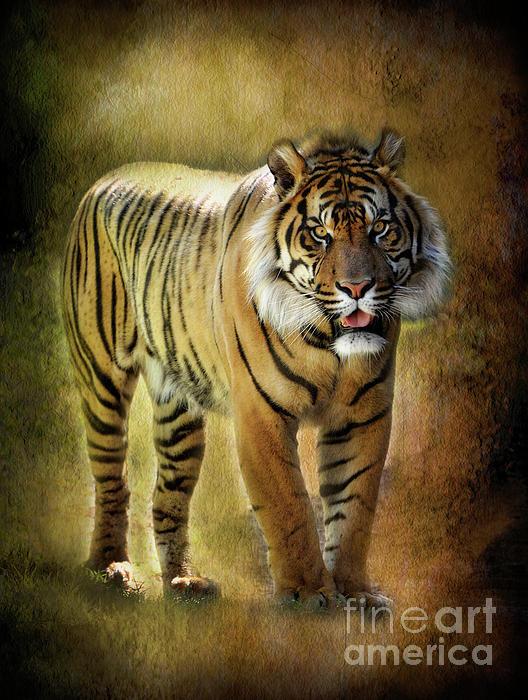 Sumatran Tiger  Print by Saija  Lehtonen