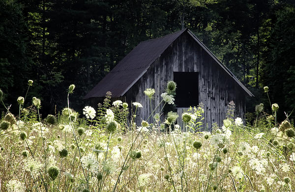 Rob Travis - Summer Barn