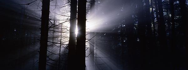 Sun Breaking Through Mists Print by Intensivelight