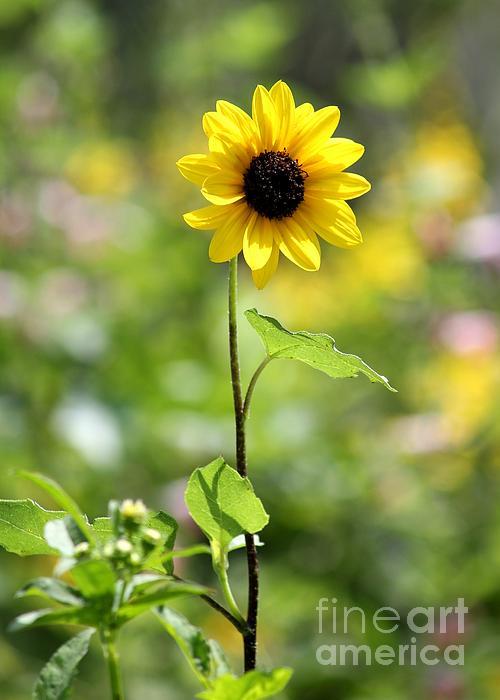 Theresa Willingham - Sunny Flower