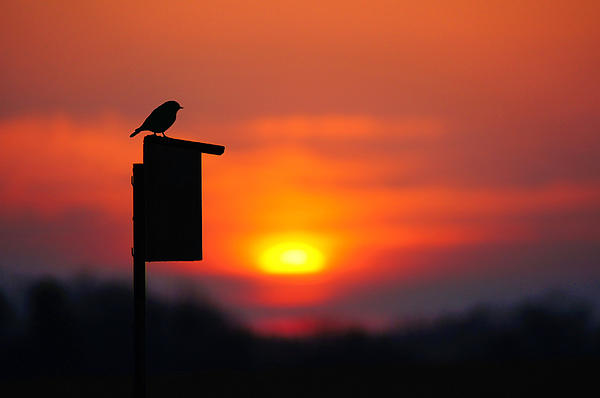 The Early Bird Photograph
