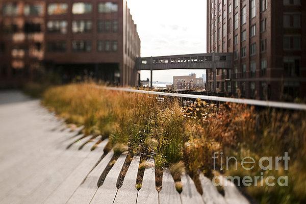 The High Line Park Print by Eddy Joaquim