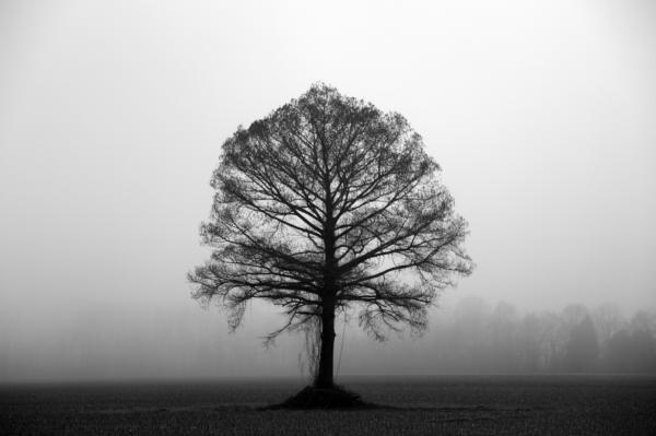 The Tree Print by Amanda Barcon