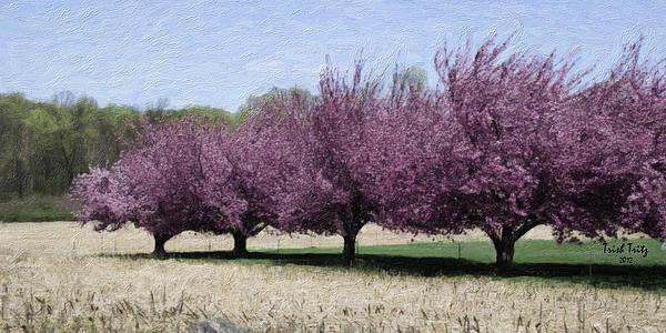 Trees On Warwick Print by Trish Tritz