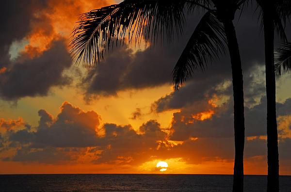 Lynn Bauer - Tropical Sunset