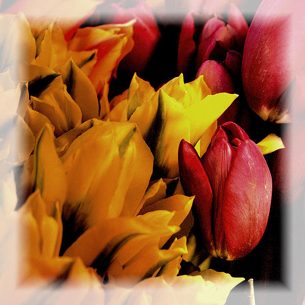 Tulips  Print by David Patterson