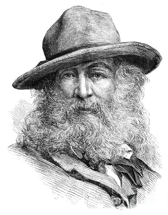 Walt Whitman (1819-1892) Print by Granger
