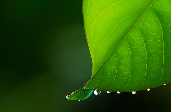 Cyndy Knudson - Water drops