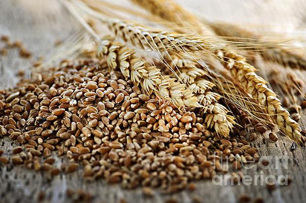 Wheat Ears And Grain Print by Elena Elisseeva