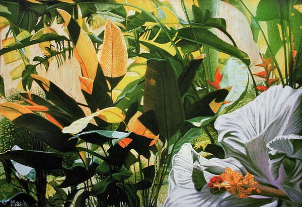 White Hibiscus With Palms Print by Stephen Mack