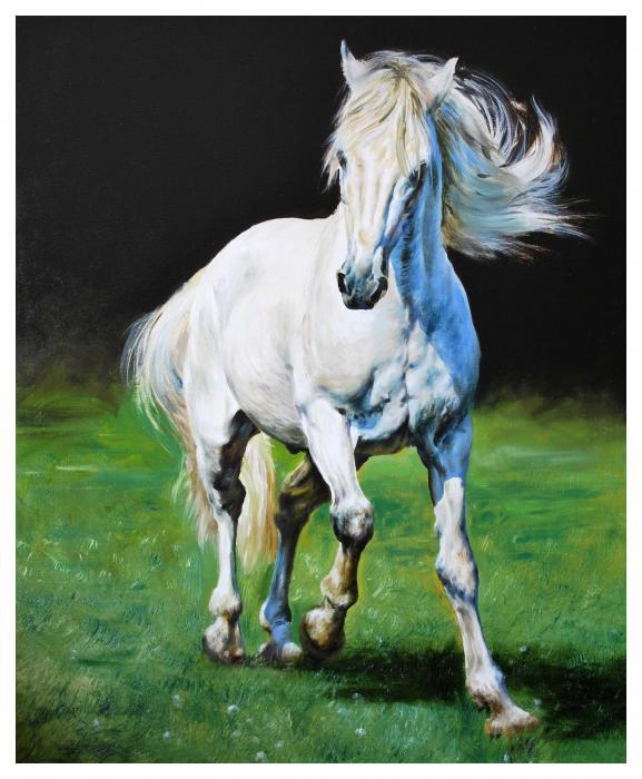 Adda Faery Queen 1-white-horse-manuel-garcia