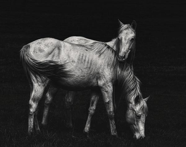 Heather  Rivet - Wild Horses
