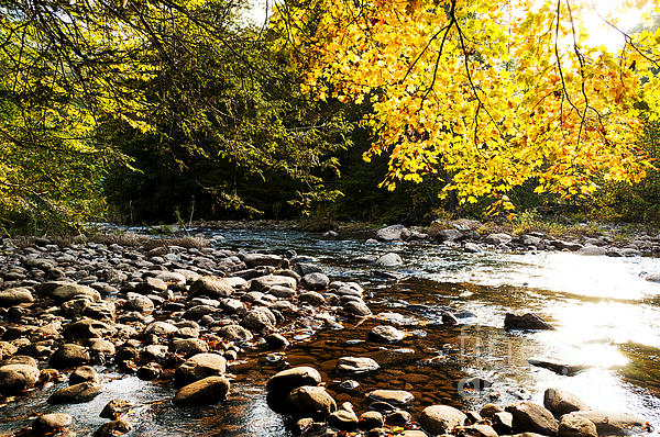 Thomas R Fletcher - Williams River Autumn