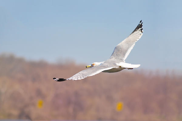 Wingspan Print by Bill Cannon