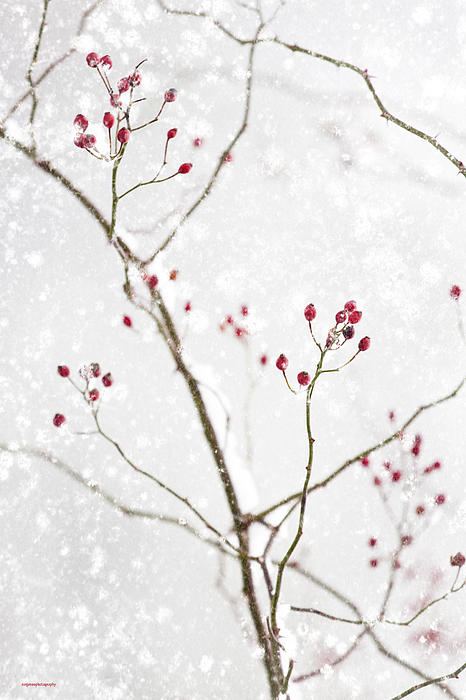 Ron Jones - Winter Red