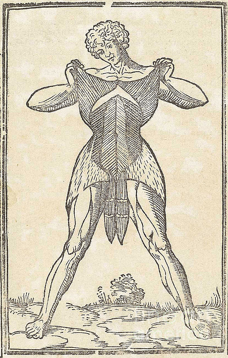 Historical Anatomical Illustration Print by Science Source