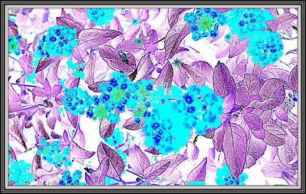 Anand Swaroop Manchiraju - Flowers Flowers And Flowers