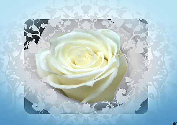 Wedding Rose Collection  Photograph  - Wedding Rose Collection  Fine Art Print