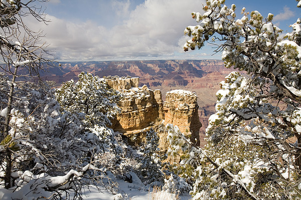 Winter Time On The South Rim Print by Michael S. Lewis
