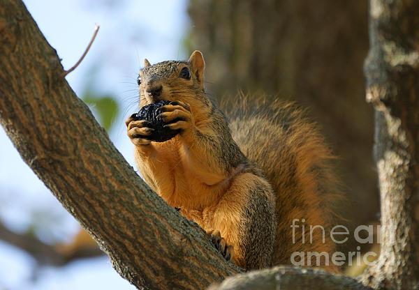 Squirrel Print by Lori Tordsen