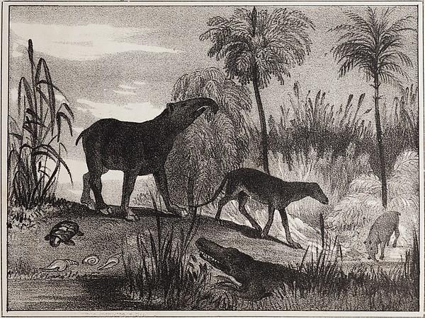 1837 Extinct Prehistoric Animals Paris Print by Paul D Stewart